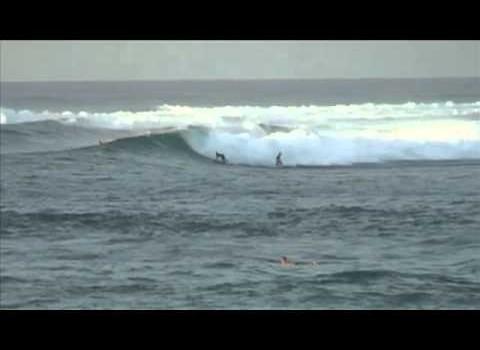 サーフムービー:How To Surf – Don't Drop In!