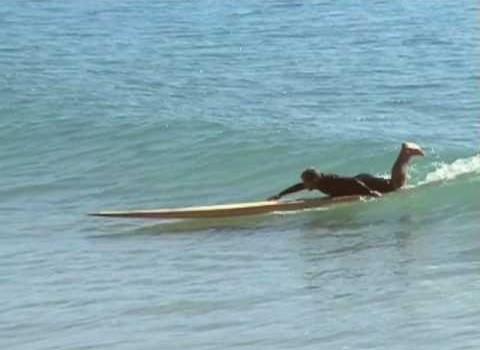 サーフムービー:Tom Wenger surfs 16 ft Toothpick! – Nathan Oldfield